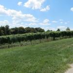 Verona Vineyards 4